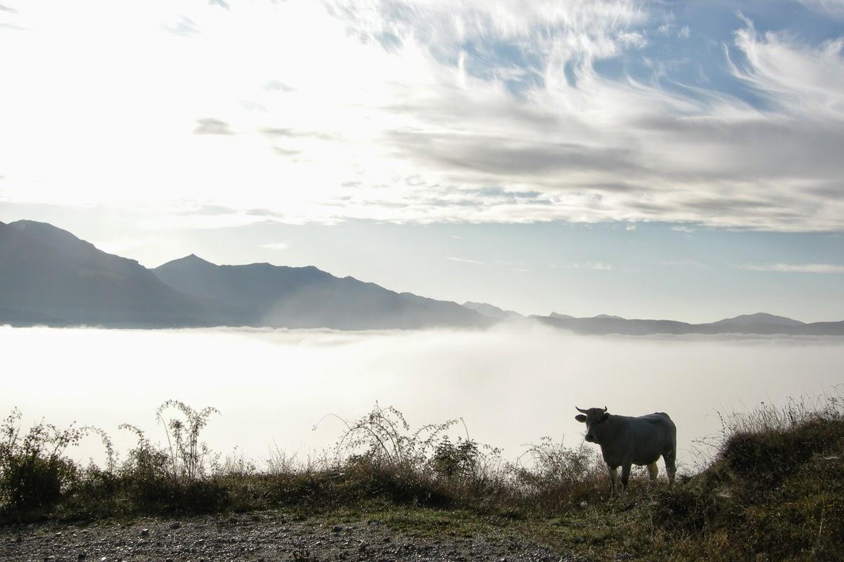 """Azienda Agricola """"Alta Montagna Bio"""" di Accumoli"""